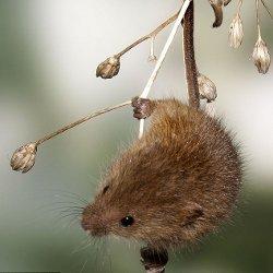 зависает мышка на компьютере